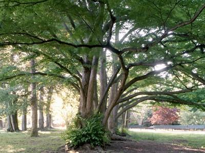 NewYorkCityofTrees